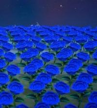 バラ 売っ て あつ ない 森