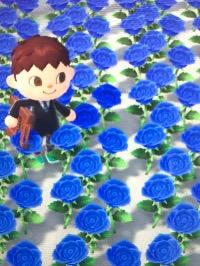 あつ 森 青い バラ