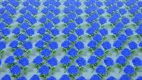 青バラの株×156|あつまれ どうぶつの森(あつ森)